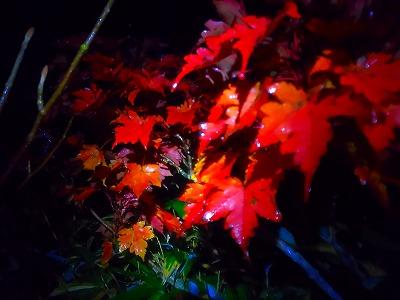 安達太良山 紅葉2