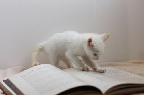 子ネコと本
