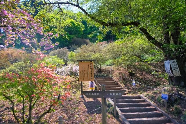 埼玉 宝登山神社奥宮への階段