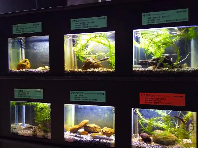 アクアマリンいなわしろカワセミ水族館  小さな水槽 近景