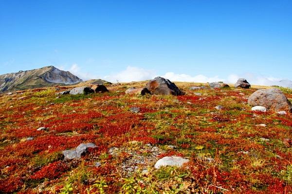 立山 室堂平 紅葉