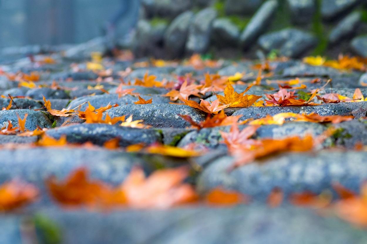 高尾山登山で初心者が会える紅葉
