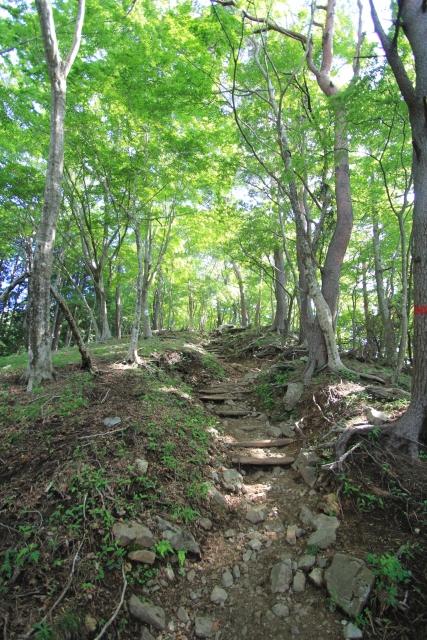 高尾山登山で初心者が会える森林浴と登山道