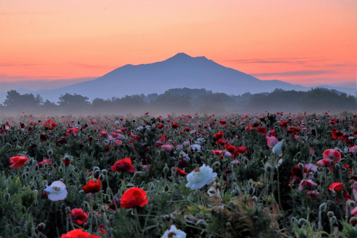 夕方の筑波山