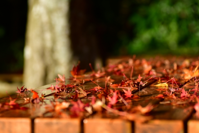 高尾山登山で初心者が会えるテーブルと紅葉
