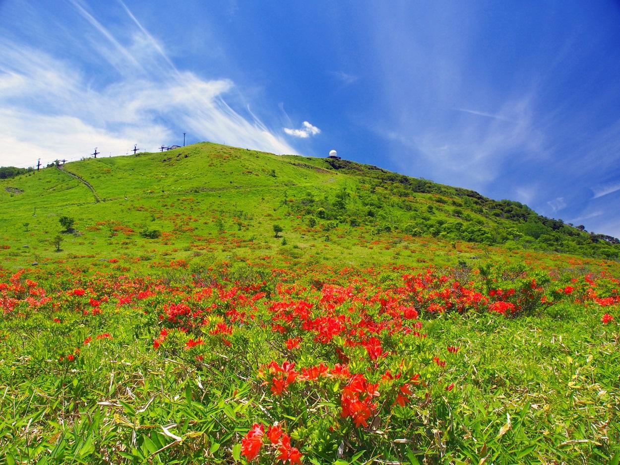 霧ヶ峰登山コースにあるレンゲツツジ