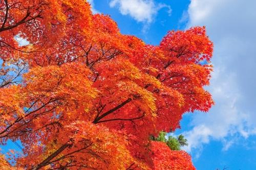 高尾山初心者がみる紅葉と青空のイメージ