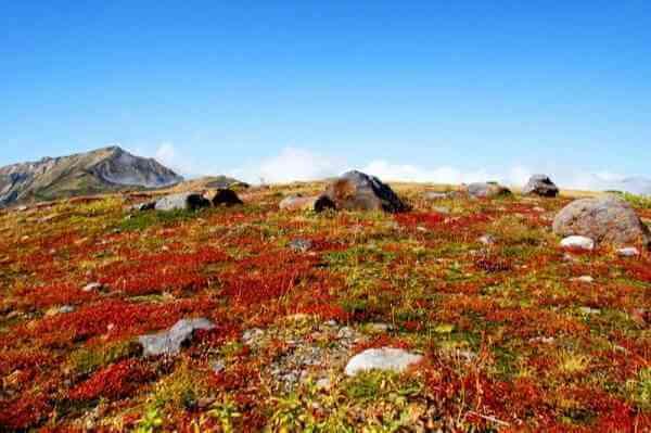 立山 登山 室堂平の紅葉