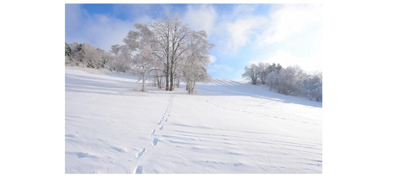 晴れた雪山の開けた景色がいい場所 雪原の画像