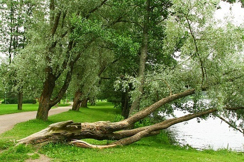 倒木の画像