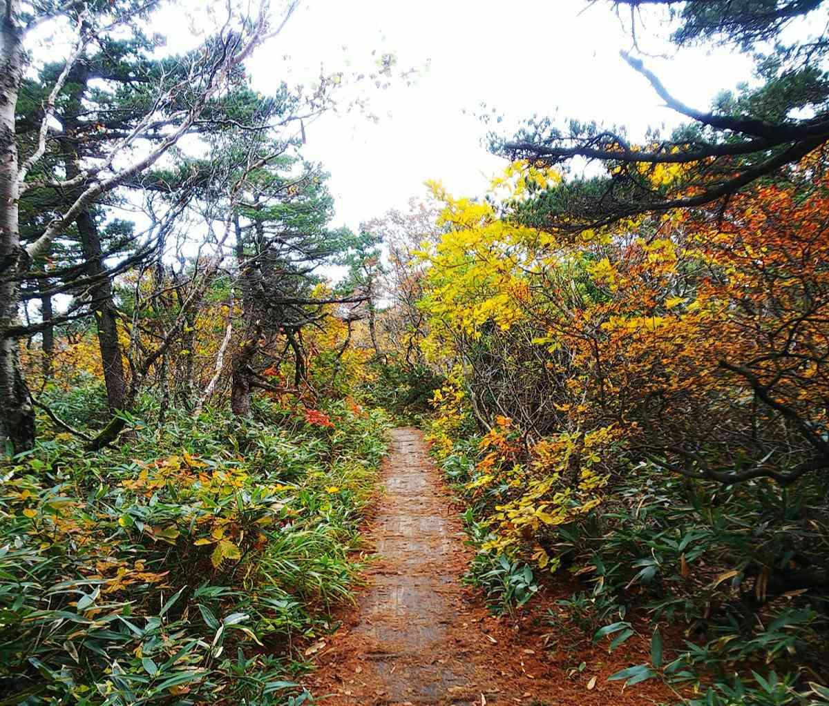 [安達太良山 登山 コース]初心者・山ガールに人気の百名山