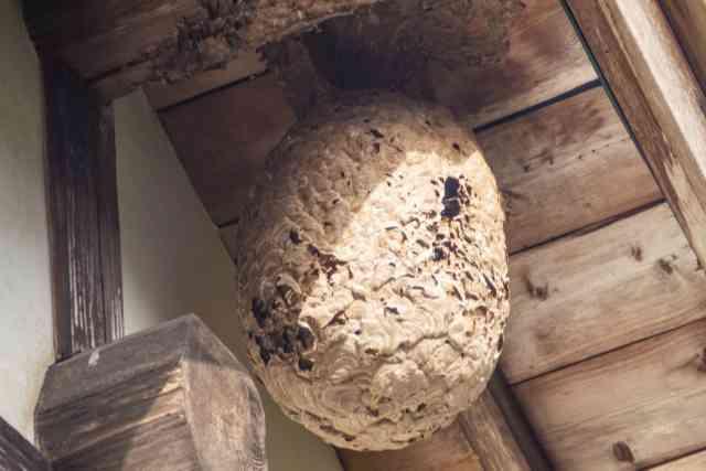 登山初心者の注意点 ハチの危険 PhotoAC