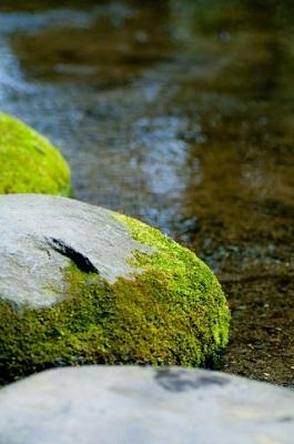 沢登りの渓流の石についたコケ