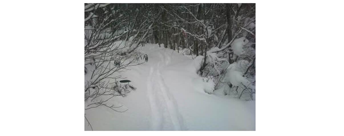 森の雪の上に山スキーの跡が続く